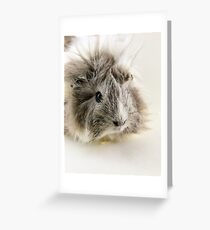 Long Haired Guinea Pig II Greeting Card