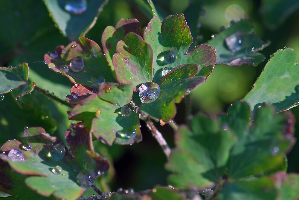 Water droplets by westie71
