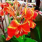 Orange flower by Shulie1
