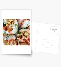 Parrot Tulips Postcards