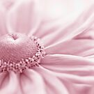 Gloriosa Daisy In Pink  by Sandra Foster