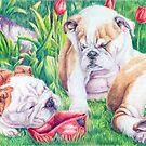 English bulldog pups by doggyshop