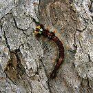 BugBaby by jkp07