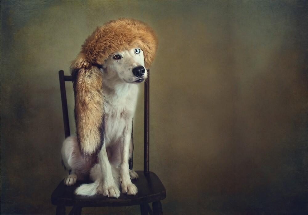 Wear the Fox hat by Texas Sheepdogs