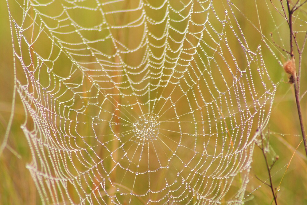 Oh What A Web We Weave by flynnch50