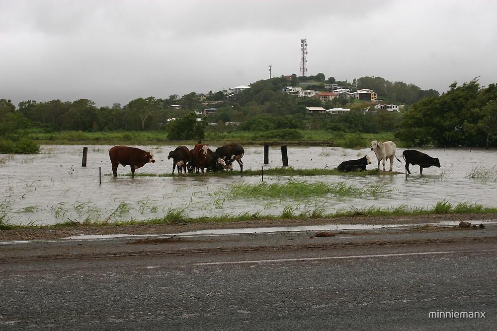 Mackay Floods #2 by minniemanx