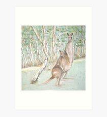 Australian Kangaroos Art Print