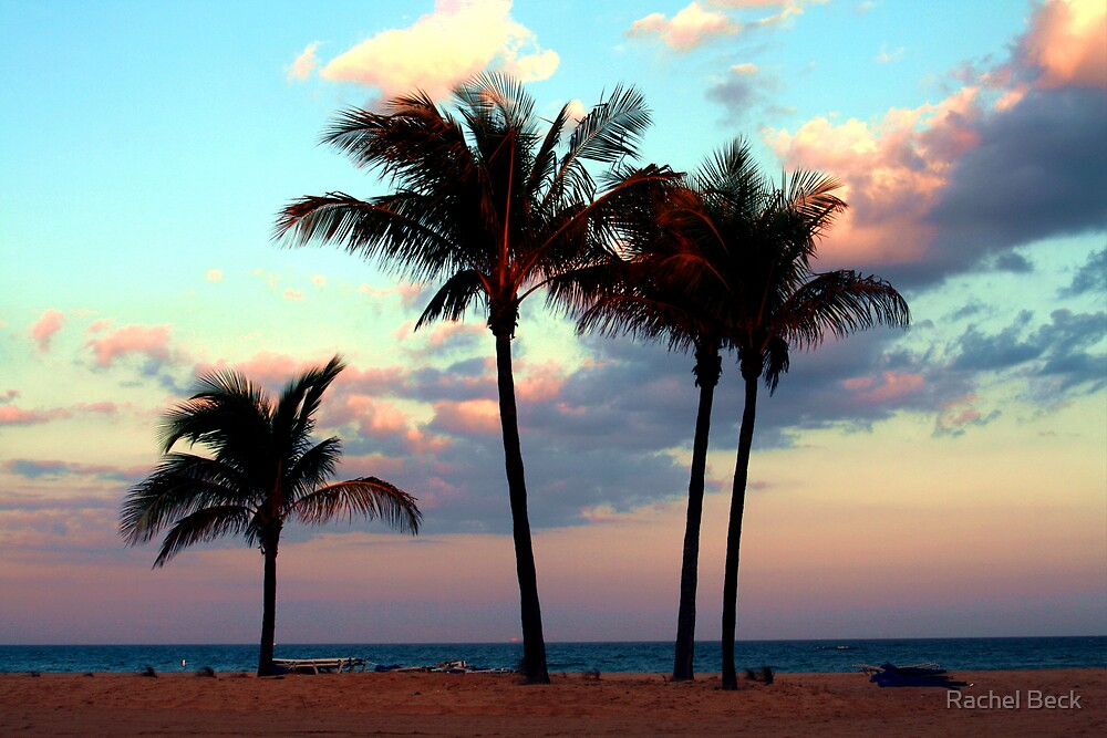 Palm Perfection by Rachel Beck
