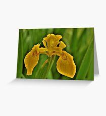 Yellow Iris in the Rain Greeting Card