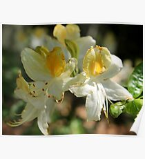 Butter Yellow Flowers Poster