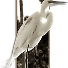 GREAT EGRET - STANDING TALL by Leigh Karchner