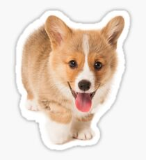 Corgi Puppy Sticker