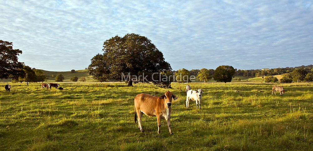 Two Cows by Mark Claridge