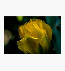 Cactus Flower Delight Photographic Print