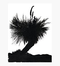 Silhouette Tree Photographic Print