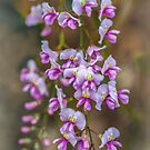 Coral Pea by Bette Devine