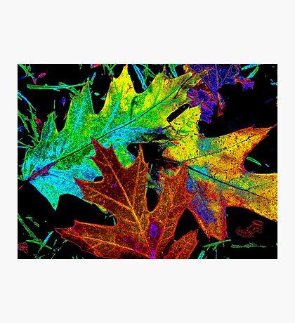 fallen leaves Photographic Print