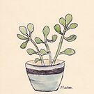Echeveria seedlings by Maree Clarkson