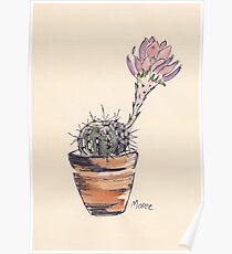Echinopsis oxygona cactus Poster