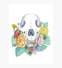 Fox Skull and Begonias Photographic Print