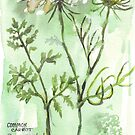 Carrots gone to seed - Botanical illustration by Maree Clarkson