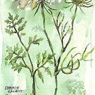 Karotten gegangen zu Samen - botanische Illustration von Maree Clarkson