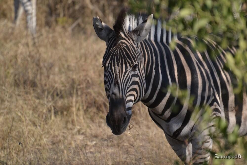 Zebra Peeking Around The Bush by Sauropod8