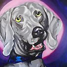 Gus the weimaraner by Jeremy McAnally