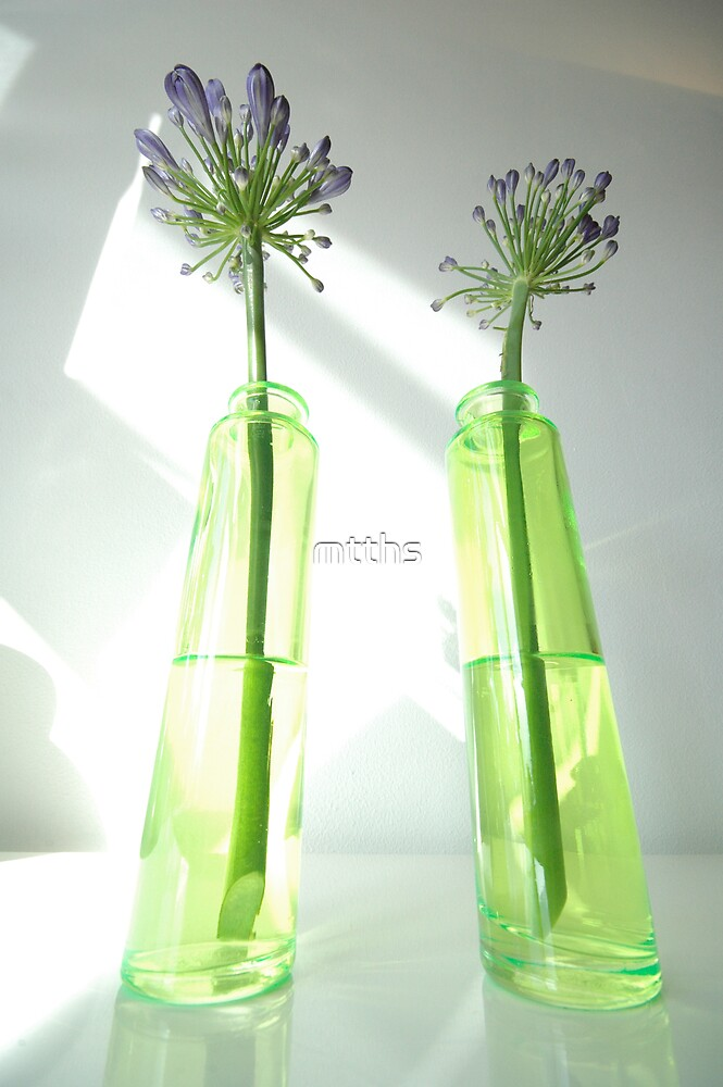 agapanthus perspectives by mtths