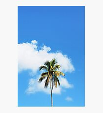 Palm tree in Cuba Photographic Print
