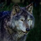 The Night of The Wolf by Tarrby