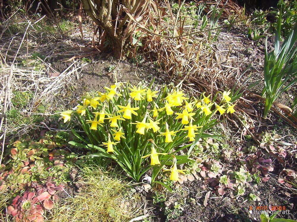 Spring time by irene garratt