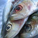 fish food by mtths