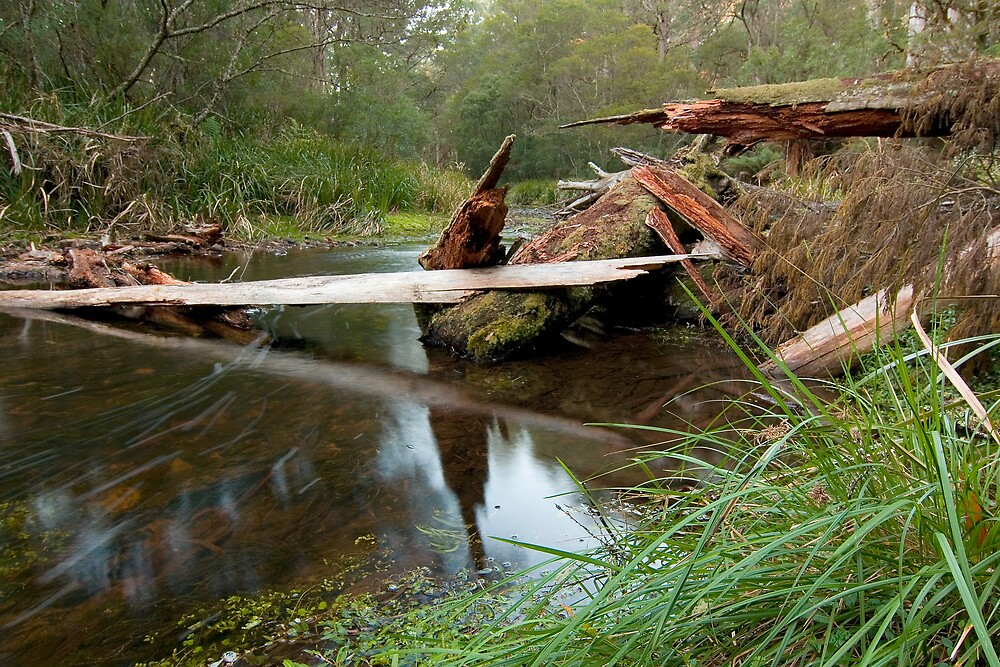 Broken Wood by Dave Preston