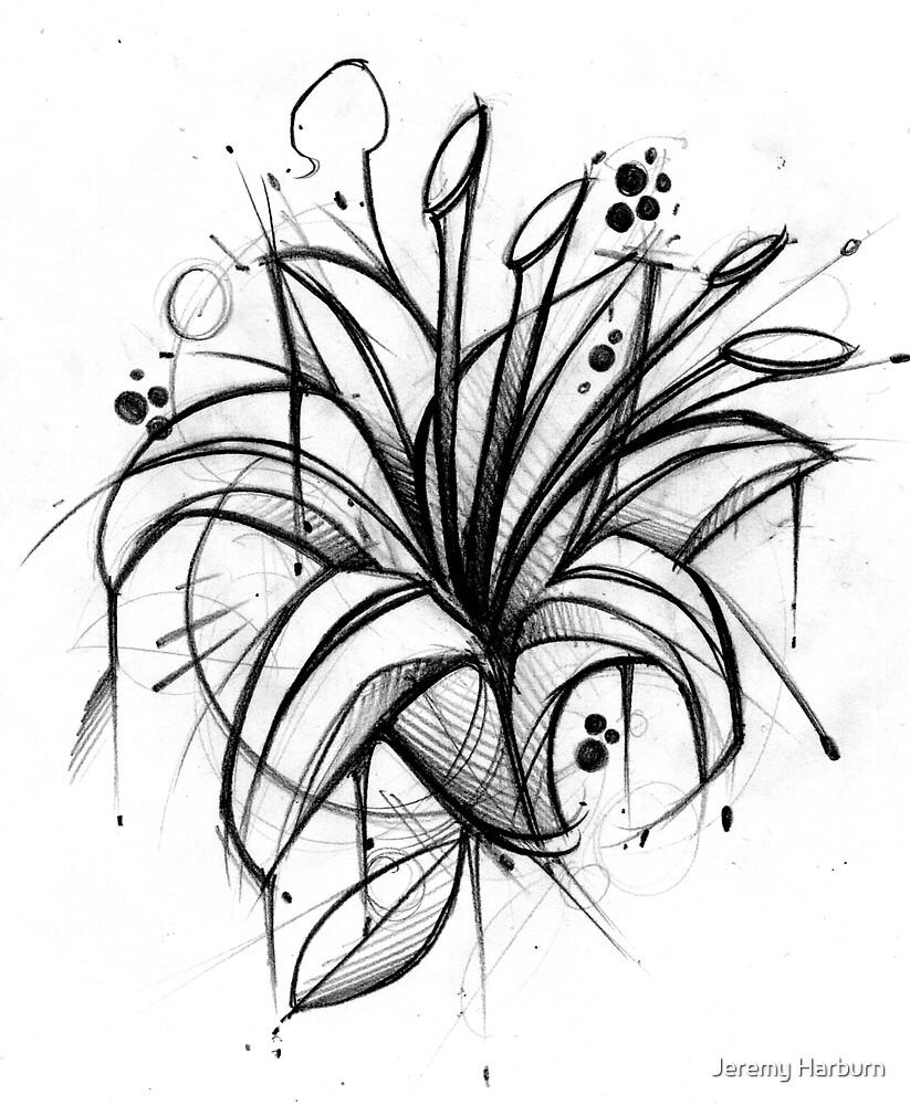 Lily Doodle by Jeremy Harburn