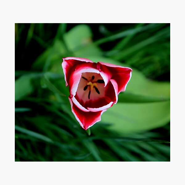 spring has sprung 2017 Photographic Print