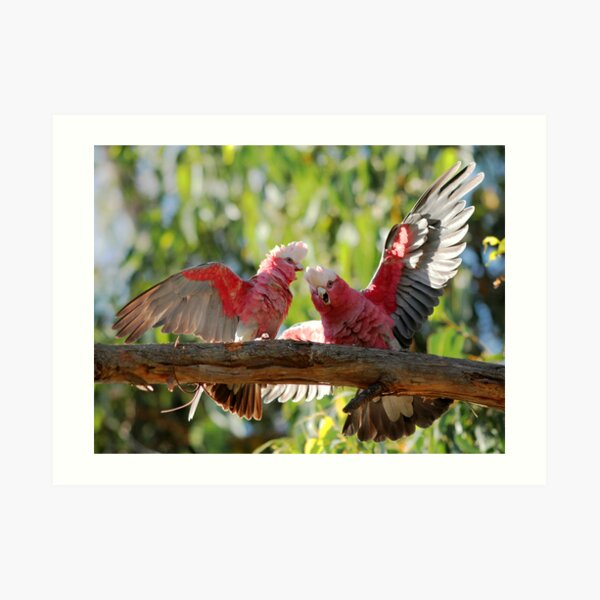 The Australian Galah Art Print