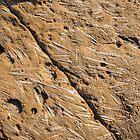 Fascinating Fossils Take Three by Georgia Mizuleva