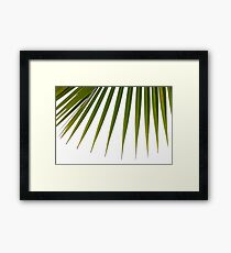 Exotic Palm tree 3 Framed Print