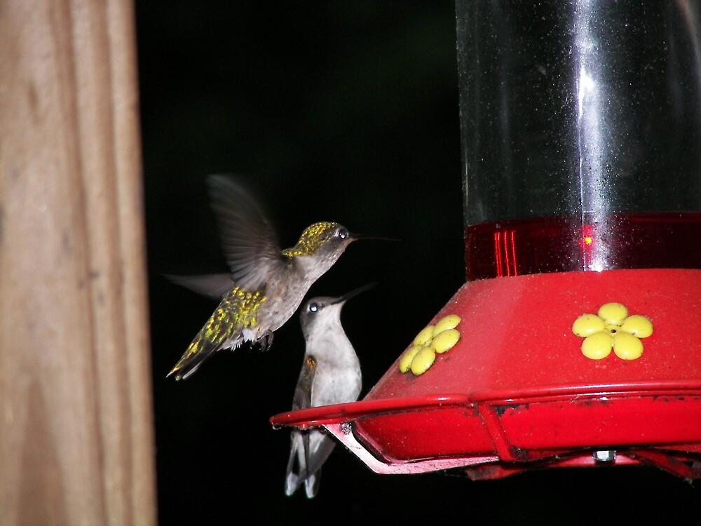 Hummingbirds by Kelli Short