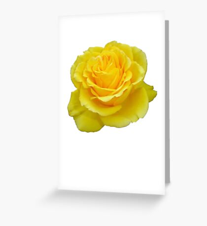 Beautiful Yellow Rose Closeup Isolated On White Greeting Card
