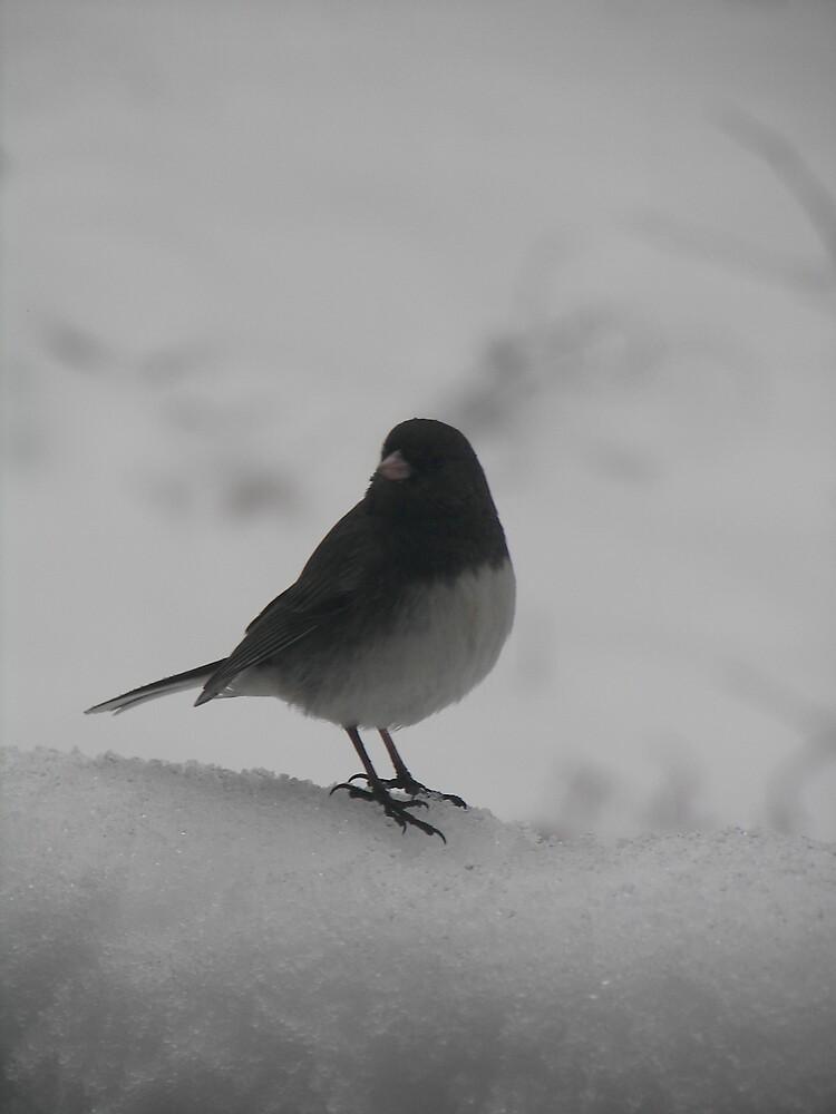 Winter bids by Kelli Short