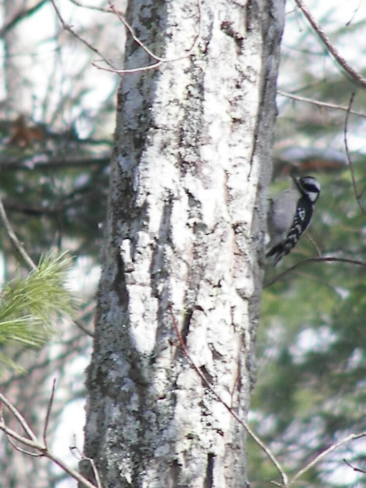 Woodpecker by Kelli Short