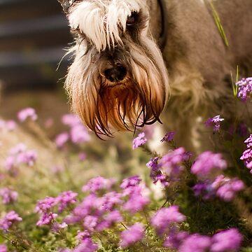 Schnauzer in Wildflowers by Ohlordi