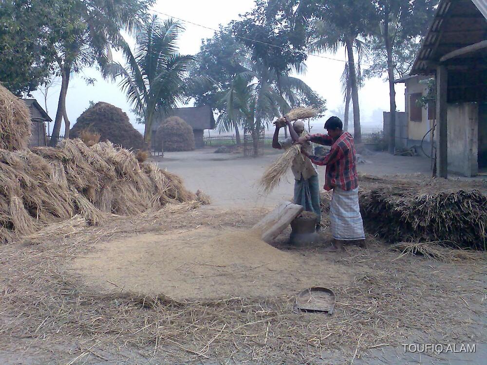 Farmers of Bangladesh by TOUFIQ ALAM