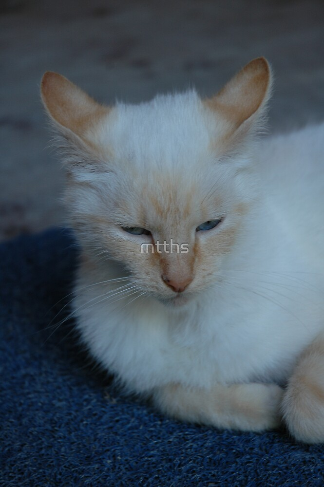 blue eyed cat by mtths
