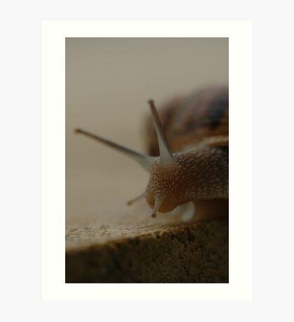 snail 2 Art Print