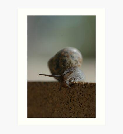 snail on the edge Art Print