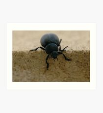 black insect calosoma Art Print