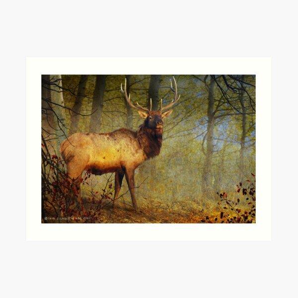 aspen forest bull elk Art Print